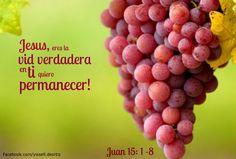 La Biblia: Juan 15: 1-18