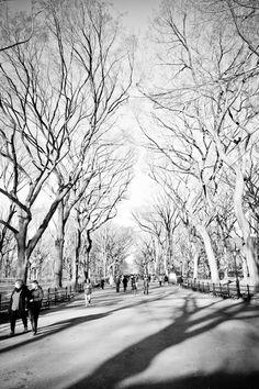 Central Park // New York City