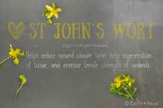 St John`s Wort (Hypericum perforatum) ~ Helps reduce wound closure time, help regeneration of tissue, and increase tensile strength of wounds.