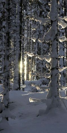 Winter is one of the most beautiful seasons around the world. All around the world, there are endless examples of almost magical winter scenes. Winter Szenen, I Love Winter, Winter Magic, Winter Christmas, Winter Trees, Snowy Trees, Winter White, Birch Trees, Christmas Tree