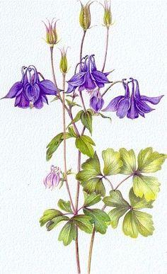 Gallery.ru / Фото #102 - Анатомия растений 1 - lanaluz