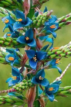 Imágenes de 55 flores tan bellas y exóticas que quitan el hipo... ¿Y tú te las vas a perder?