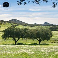 Extremadura. Está limitada al norte por el macizo central de la Sierra de Gredos y dividida de este a oeste por los Montes de Toledo. Al sur, Sierra Morena establece la linde natural con Andalucía. Encinares adehesados en buen estado de conservación, roble melojo, alcornoque, acebuche, quejigo, madroño y abedul. En las riberas: fresno, sauce y aliso, acompañados de almez y tamujo.