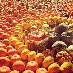 "Dallas Arboretum and Botanical Garden @tylersharpphoto ""Pumpkin party"" on Instagram @Dallas Dyer Arboretum Autumn Pictures, Dallas Arboretum, Pumpkin Farm, American Pie, Winter Springs, Autumnal, Botanical Gardens, Autumn Leaves, Pumpkins"