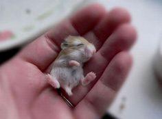 Cute pups sleeping in my Hand http://ift.tt/2lqcGjL