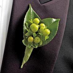 hypericum berries - Bing Images