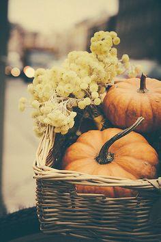 we <3 fall pumpkins