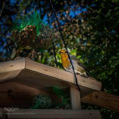 peace bird by FredBour via http://ift.tt/2elBtnX