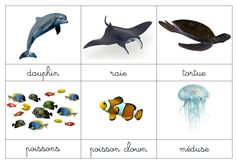 cartes de nomenclature MER : faune et flore French Alphabet, Robinson Crusoe, Montessori Education, Fauna, Under The Sea, Cute Pictures, Activities For Kids, Homeschool, Learning