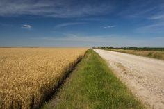 Caminho de volta para Oklahoma, em meio aos campos cultivados no condado de Kay, OK,  USA.  Fotografia: Daniel L.