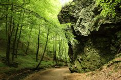 Thüringer Wald  Tabarz Rundwanderung Thorstein - Das Felsentor