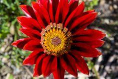 Biodiversity Showcase Garden in Cape Town