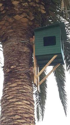 Eagle owl nest box