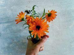 Vackra blommor, foto taget av Melanie Freij