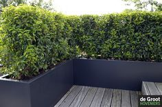 Planters used to make a partition on a roof terrace., Planters used to make a partition on a roof terrace. - Planters used to make a partition on a roof terrace. Portuguese laurel is. Outdoor Planters, Outdoor Landscaping, Outdoor Gardens, Outdoor Decor, Terrace Decor, Balcony Plants, Rooftop Garden, Back Gardens, Garden Inspiration