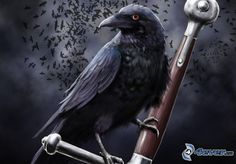 Techera Matias Roac, the raven. Cersei Lannister, Fantasy Warrior, Golondrinas Tattoo, Game Of Thrones, Fantasy Anime, Dark Fantasy, Quoth The Raven, Raven Art, Crow Art
