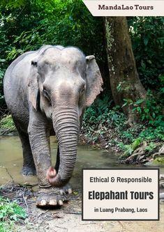 MandaLao Tours: The Ultimate Elephant Encounter in Laos