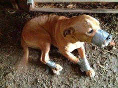 Duct-taped dog rescued; investigators ask for public's help