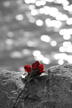 Κοίταξε να ζήσεις την αγάπη που έχασες. Να χαρείς την αγάπη που περιμένεις. Καν' την τραγούδια, ξενύχτια. Καν' την βιβλία, αταξίες. Μόνο μην τη μοιρολογάς. Είναι σαν να τη βρίζεις. Σαν να της κλείνεις το δρόμο να ξανάρθει.  Μενελαος Λουντέμης.....