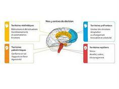 4 centres de décision du cerveau - conférence vidéo sur la GMM (Gestion des Modes Mentaux)