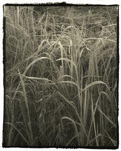 gyouka - for grainedephotographe.com