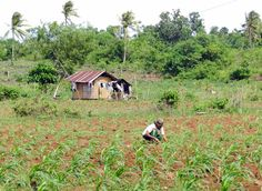 Farmer working in the countryside of Camotes, July 8th