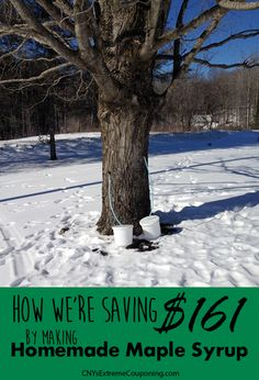 Learn how to collect maple sap and make your own homemade maple syrup.  It tastes great and saves money!
