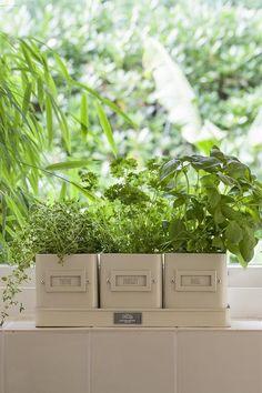3 charmante Töpfe mit Untersetzer aus emailliertem Blech setzen Deine Küchenkräuter elegant in Szene. #Küchenkräuter #Kräuter #Küche #urbangardening