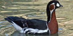 Pasări pe cale de dispariție din ... Birds, Animals, Animales, Animaux, Bird, Animal, Animais