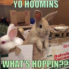 "That's Bunny Slang For ""Hi Everyone!"" ☺☺☺   ❤ http://smallpetselect.com/ ❤"