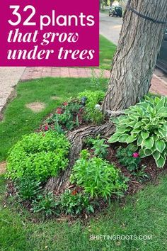 Trying to landscape a flower bed in your front yard underneath a tree and have no idea what to plant? It's not as hopeless as it seems. Here are 32 ideas of the best flowers, bushes, and ground cover you can grow. art design landspacing to plant Landscaping Around Trees, Front Yard Landscaping, Landscaping Shrubs, Landscaping With Rocks, Landscaping Tools, Ranch House Landscaping, Deck Around Trees, Front Yard Planters, Landscaping Contractors