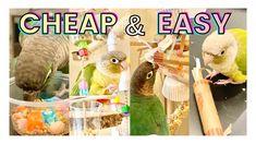 CHEAP DIY BIRD TOYS | DIY Dollar Store Bird Toys - YouTube Diy Bird Toys, Diy Toys, Pet Stuff, Dollar Stores, Birds, Pets, Youtube, Bird, Thrift Stores