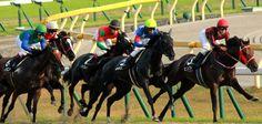 horse race in tokyo,Japan