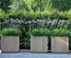 Tongue & groove cedar planters: De Rooy Hoveniers: Klanten en hun tuin Tongue & groove cedar planters: De Rooy Hoveniers: Customers and their garden Cedar Planters, Garden Planters, Planter Boxes, Container Plants, Container Gardening, Pallet Gardening, Back Gardens, Outdoor Gardens, Agapanthus