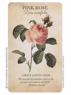 Love Flowers, My Flower, Vintage Flowers, Beautiful Flowers, Botanical Flowers, Botanical Illustration, Botanical Prints, Flower Meanings, Language Of Flowers