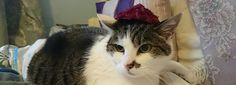 Mrs. Nesbit has nothing on Artemis' red rose and genuine grey pearl Easter Bonnet!