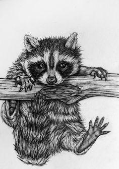 Original Raccoon Pencil Drawing 62 Baby Raccoon by rachelledyer