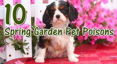 10 Pet Poisons Lurking in Your Spring Garden ©