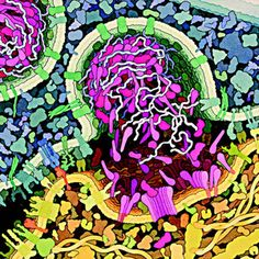 Stunning molecular biology illustrations look like floral abstract art: Cytotoxic T Cell. By Molecular biology professor and artist David Goodsell. Biology Art, Cell Biology, Molecular Biology, Science Illustration, Watercolor Illustration, Medical Illustration, Science Art, Science Ideas, Art Challenge