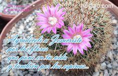 Agradécele a Jesucristo por las flores que pone en tu vida y también por las espinas, el sabrá por que lo hace. Frases de agradecimiento a Dios en #SemanaSanta