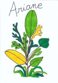 Etiquettes de porte manteau/ plantes imaginaires
