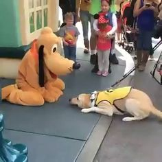 Service dog in training gets to meet his favourite character, Pluto!   facebook....