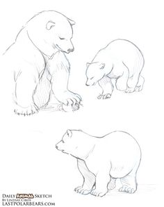 The Last of the Polar Bears - Daily Animal Sketch – Baby Polar Bears