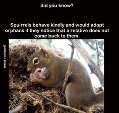 Yes!  We saw one helping an injured little guy climb a tree. So sweet.