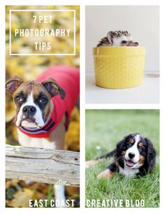 Pet Photography Tips East Coast Creative