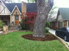 Let your trees breathe: dig up the grass (and compost it!) around the perimeter of the tree trunk, put down weed stop fabric and mulch.  Your tree will be much happier!