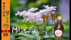 Mädesüß Likör - Rezept von Bettina Böhme Foodblogger, Juni, Spa, Hello Weekend, Vodka, Medicinal Plants, Homemade, Summer
