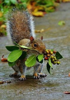 Amazing Wild Animal Pictures – 40 Pics This squirrel is decorating his nest for the holidays. Animals And Pets, Baby Animals, Funny Animals, Cute Animals, Wild Animals, Beautiful Creatures, Animals Beautiful, Cute Squirrel, Squirrels