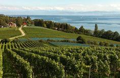 Spätsommer am westlichen Bodensee: Dahlienblüte, Wein und mehr…