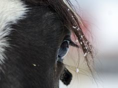 Horse, cheval Photos, Horses, Animals, Animales, Pictures, Animaux, Horse, Words, Animal